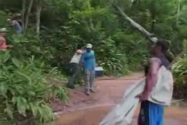 سكس غابات الامازون